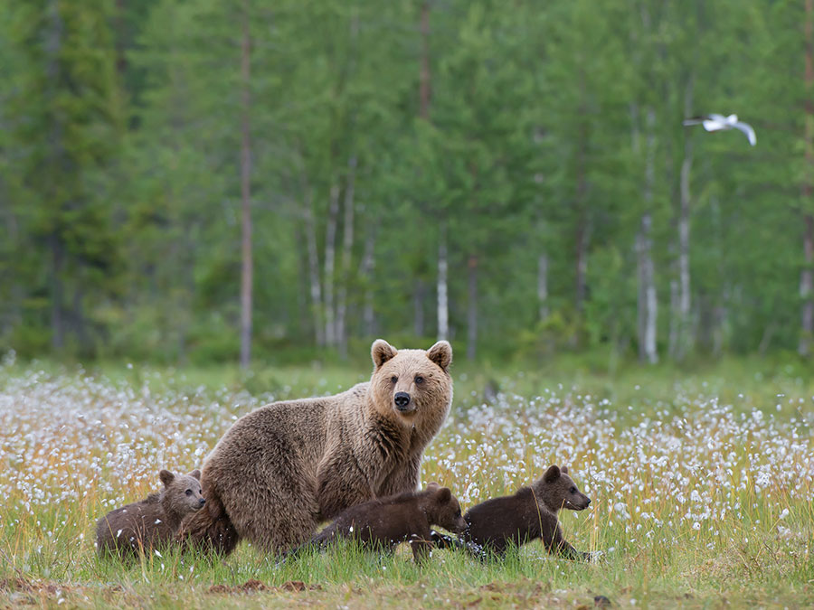 Bear Cougar Aware Course